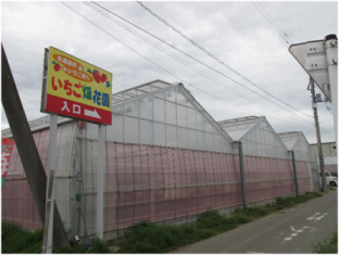 いちご狩り1.jpg